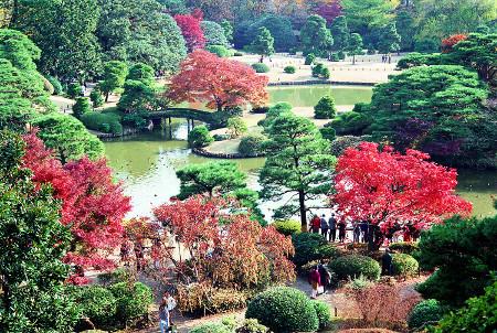 ≪Famous Autumn Foliage Spots≫ Rikugien Gardens