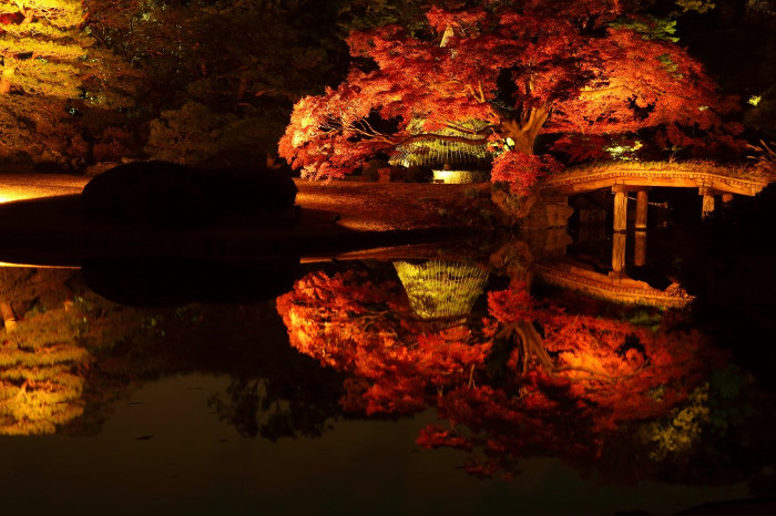 Autumn Evening Illumination at Rikugien Gardens