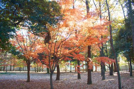 ≪Famous Autumn Foliage Spots≫ Fuchuunomori Park