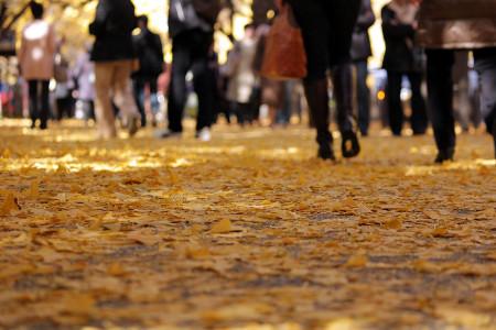 ≪Famous Autumn Foliage Spots≫ Meijijingu gaien