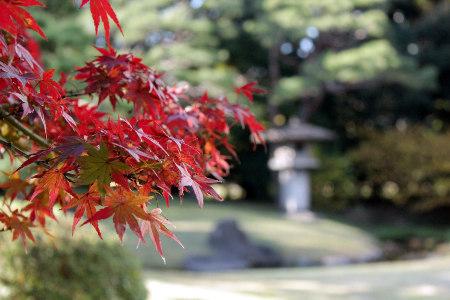 ≪Famous Autumn Foliage Spots≫ Hama-rikyu Gardens