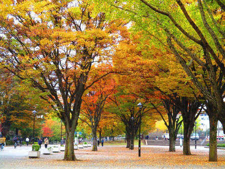 ≪Famous Autumn Foliage Spots≫ Hikarigaoka Park