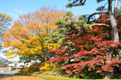 ≪Famous Autumn Foliage Spots≫ The East Gardens of the Imperial Palace