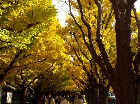 ≪Autumn Foliage Spots≫ Meijijingu gaien