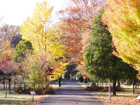 ≪Famous Autumn Foliage Spots≫ Musashino Park