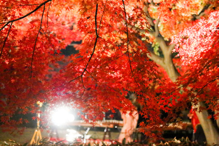 Otaguro park Autumn Foliage Light-up
