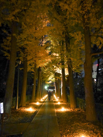 Autumn Evening Illumination at Otaguro park