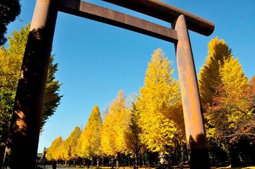 ≪Autumn Foliage Spots≫ Yasukuni Jinja Shrine