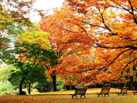 ≪Autumn Foliage Spots≫ Yoyogi Park