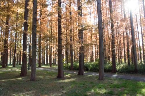 ≪Autumn Foliage Spots≫ Mizumoto Park