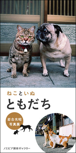 "Mitsuaki Iwago Photographic Exhibition ""Cats & Dogs"""