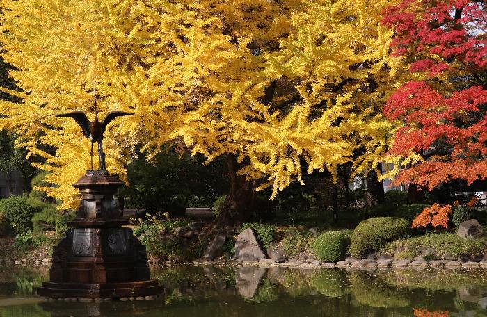 ≪Autumn Leaves Viewing Spot≫ Hibiya Park