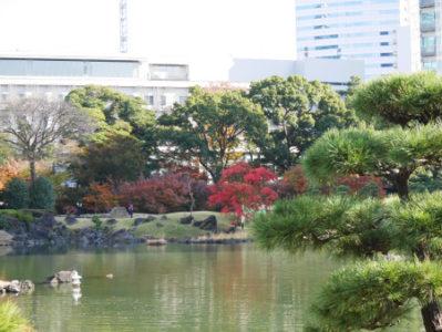 ≪Famous Autumn Foliage Spots≫ Kyu-Shiba-rikyu Gardens