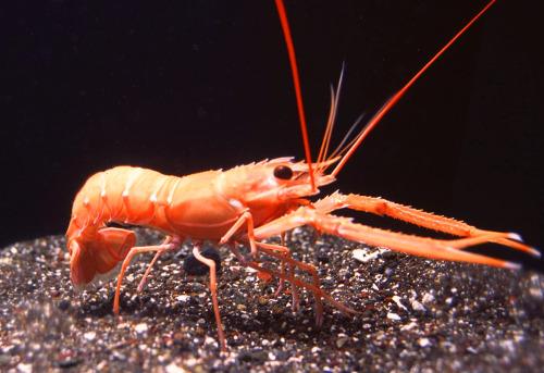 Exciting Creatures of the Deep Sea 2020 (Sunshine Aquarium)