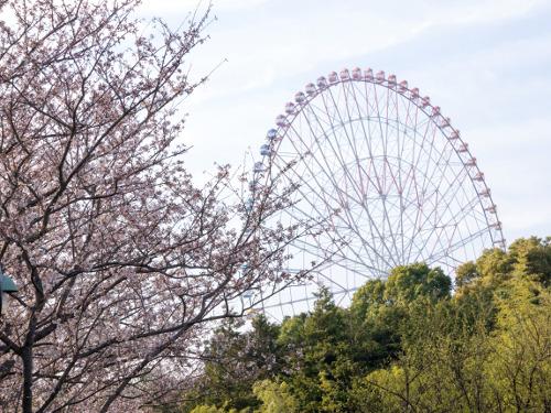 ≪Cherry Blossom Spots≫ Kasai Rinkai Park