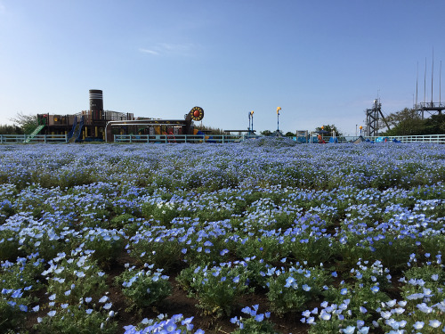 "Nagai Seaside Park Soleil Hill ""Nemophila"""