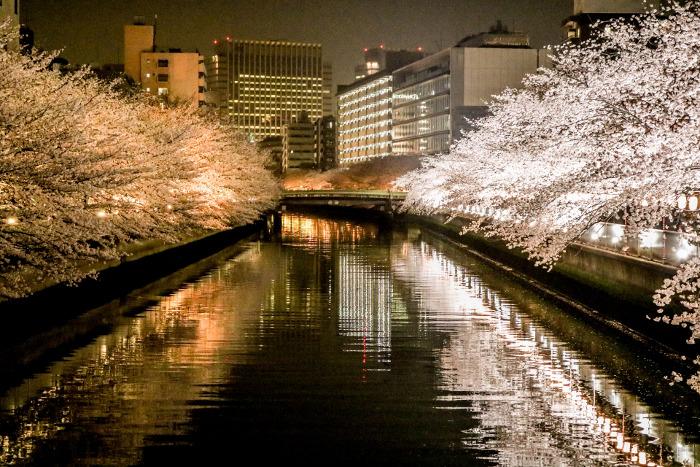Oedo Fukagawa Cherry Blossom Festival
