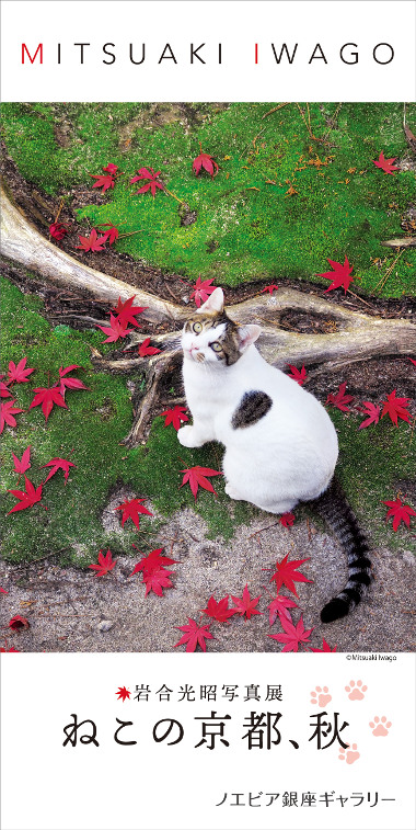 "Mitsuaki Iwago Photographic Exhibition ""A Cat's Kyoto, Autumn"""