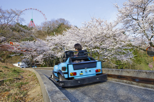 Lake Sagami Pleasure Forest Sakura Festival