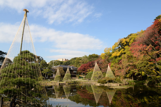 ≪Autumn Leaves Viewing Spot≫ Higo Hosokawa Garden